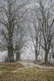 用霜盖的树 免版税图库摄影