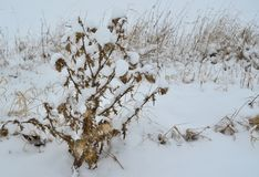 用霜盖的植物,南波希米亚 免版税图库摄影
