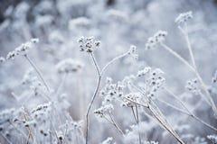 用霜盖的植物 免版税库存图片
