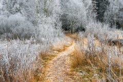 用霜盖的美丽的赤裸灌木 免版税库存照片