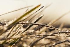 用霜草叶盖 图库摄影