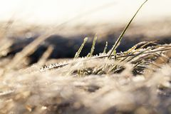 用霜草叶盖 库存照片