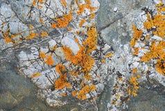 用青苔一束报道的粗砺的石头纹理  免版税库存图片