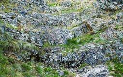 用青苔和地衣盖的岩石,抽象自然背景 库存图片