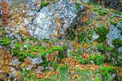 用青苔和地衣盖的岩石,抽象自然背景 免版税库存照片