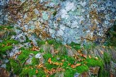 用青苔和地衣盖的岩石,抽象自然背景 免版税库存图片