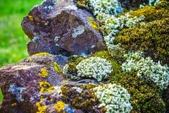 用青苔和地衣盖的岩石,抽象自然背景 免版税图库摄影