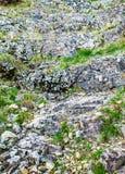用青苔和地衣盖的岩石,抽象自然背景 图库摄影