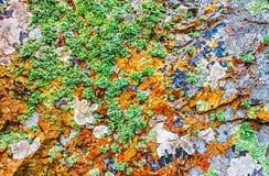 用青苔和地衣盖的岩石,抽象自然背景 库存照片
