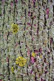 用青苔密集地盖的纹理树干 免版税库存照片