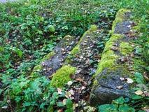 用青苔盖的台阶,在台阶旁边的植物 库存图片