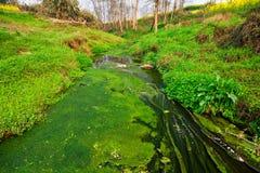 用青苔盖的小河 库存照片