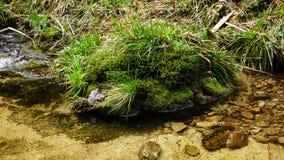 用青苔盖的岩石在河床上 库存图片
