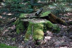 用青苔盖的老树桩 库存图片
