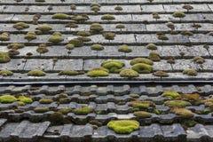 用青苔盖的铺磁砖的国家屋顶 库存图片