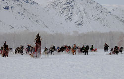 用马拉的雪橇比赛 免版税库存图片