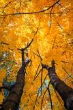 用黄色叶子盖的树在秋天 免版税库存图片