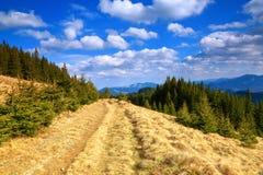 用黄色干草盖的道路 免版税库存照片