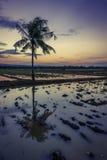 用水在日落的棕榈树在归档的在亚洲 免版税库存照片