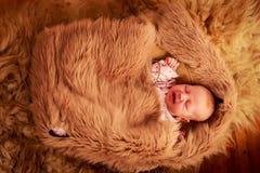 用绵羊报道的新出生的婴孩睡眠下跌 库存图片