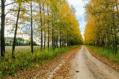 用黄色叶子盖的秋天胡同 库存照片