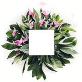 用绿色叶子装饰的淡色木制框架,文本的空间 嘲笑 库存图片