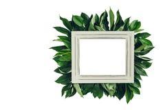 用绿色叶子装饰的淡色木制框架,文本的空间 嘲笑 库存照片