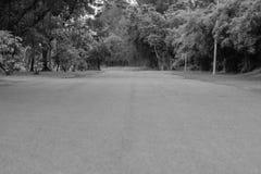 用绿色自然本底观看路或走道在公园 库存照片