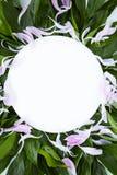 用绿色装饰的白色圆的框架离开,文本嘲笑的空的空间  图库摄影