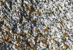 用黄色青苔一束报道的粗砺的石头纹理  免版税库存图片