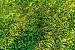 用绿色青苔报道的岩石墙壁自然本底 Abstra 图库摄影