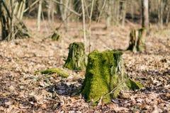 用绿色青苔盖的树桩 免版税图库摄影