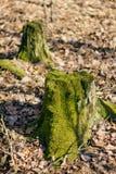 用绿色青苔盖的树桩 免版税库存图片