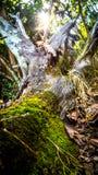 用绿色青苔盖的老树干 图库摄影