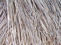 用cutted干燥芦苇秸杆盖的Thached屋顶 样式,细节 图库摄影