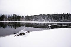 用whi和森林盖的壮观的冬天风景湖 图库摄影