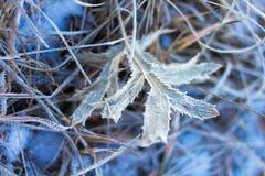 用winer霜盖的植物 库存照片