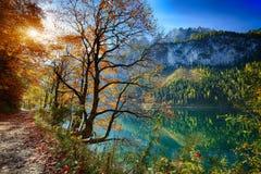 田园诗五颜六色的秋天风景美丽的景色在Gosausee la的 免版税库存照片