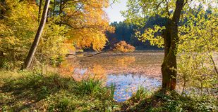 田园诗停泊thanning的湖,有秋季色的树的森林 免版税库存照片
