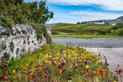 田园诗农村场面,与老石墙、五颜六色的野花和一个老村庄距离的 免版税库存图片