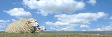 田园诗北部弗里西亚,北海,石勒苏益格-荷尔斯泰因州,德国 免版税库存图片