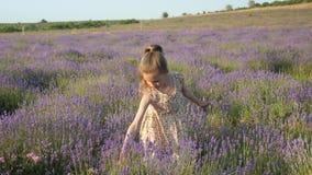 田园诗场面小白肤金发的女孩夏令时假日 淡紫色花在乡下收集 美好的横向 影视素材