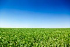 田园诗夏天风景在南英国英国 库存图片