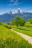 田园诗春天风景在有草甸和花的阿尔卑斯 免版税库存图片