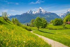 田园诗春天风景在有草甸和花的阿尔卑斯 免版税库存照片