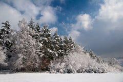 田园诗森林在冬天 库存图片