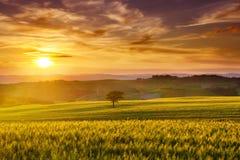 田园诗看法,根据朝阳的有雾的托斯坎小山 免版税图库摄影