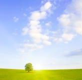 田园诗草甸结构树 库存照片