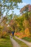 田园诗道路在秋天 免版税库存照片