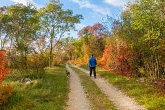 田园诗道路在秋天 库存图片